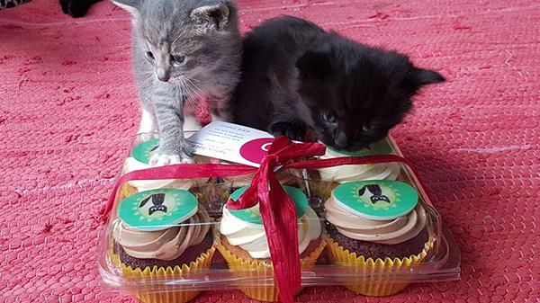Slunicko-kotata-cupcakes